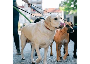 Olathe dog walker Johnson County Barking Club LLC.