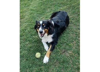 Lubbock dog walker Joyful Pets Services