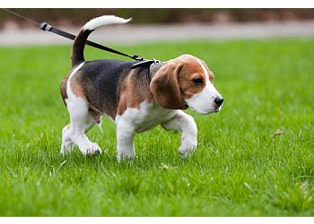 Overland Park dog walker Joy of Living Pet Sitting and Dog Walking