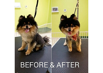 Pembroke Pines pet grooming Judy's Bath & Boutique