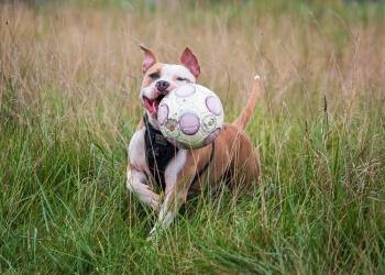 Detroit dog training K9 Turbo Training