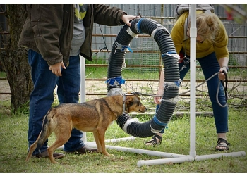 Austin dog training K9 Workingmind