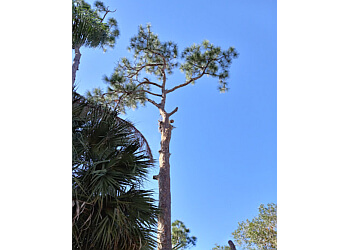 Port St Lucie tree service Kat Tale Tree Trimming