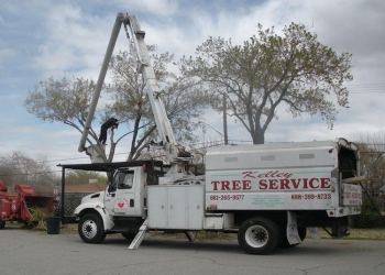 Palmdale tree service Kelley Tree Co.