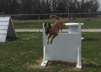 Louisville dog training Kentuckiana K-9