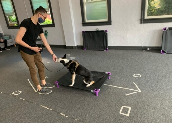 Portland dog training Kindred Dog PDX