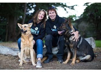 San Francisco dog training Koru K9 Dog Training & Rehabilitation