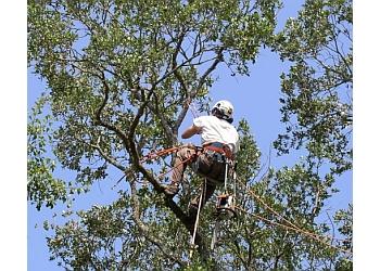 Lansing tree service Lansing Tree Service