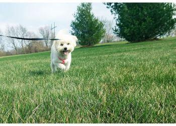Olathe dog walker Latchkey Pets