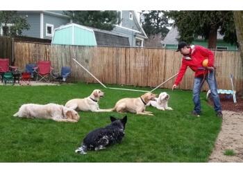 Portland dog training Leader of the Pack Dog Training, LLC