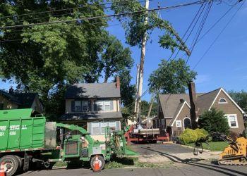 Elizabeth tree service Levi's Tree Service LLC