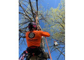 Louisville tree service Limbwalker Tree Service