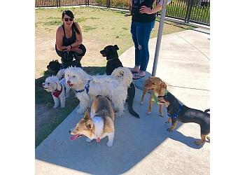 San Diego dog walker Little Buddies