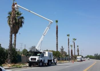 Moreno Valley tree service Lopez Tree Service