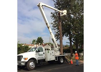 Pasadena tree service  Lopez Tree Service