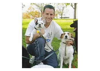 3 Best Dog Walkers In Baltimore Md Threebestrated