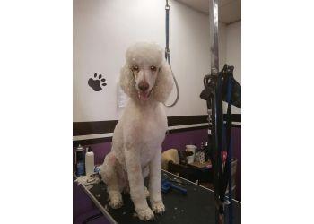 Fontana pet grooming Ma & Paws Pet Grooming