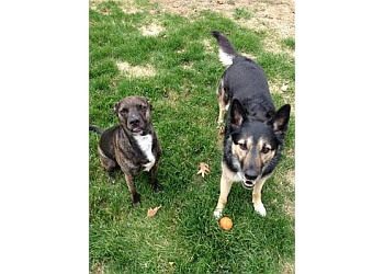 Toledo dog walker Ma & Paws Pet & House Sitting LLC