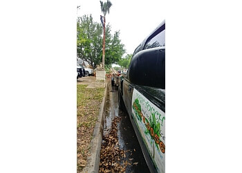McAllen tree service Magic Touch Lawn, Palm & Tree Services