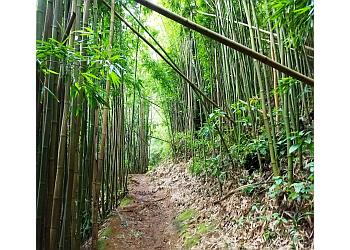 Honolulu hiking trail Manoa Falls Trail