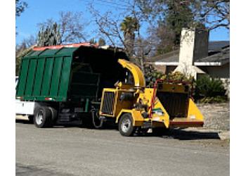 Ontario tree service Maple Tree Service