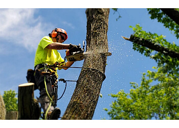 Charlotte tree service Marc'S Tree Service