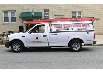 Chicago animal removal Master Trapper