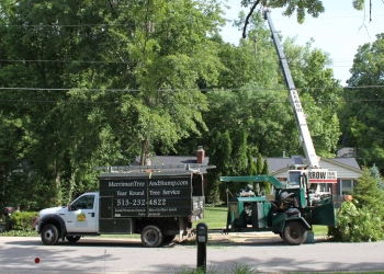 Cincinnati tree service Merriman Tree & Stump