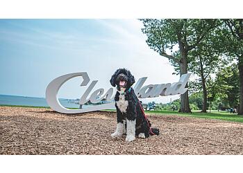 Cleveland dog training Miracle K9 Training