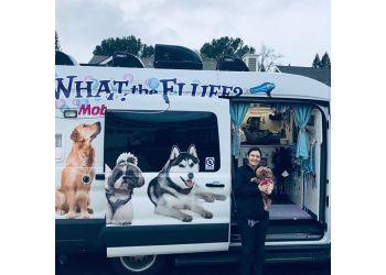 Miramar pet grooming Mobile Pet Grooming