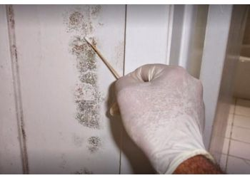 St Louis home inspection Mold Inspection & Testing