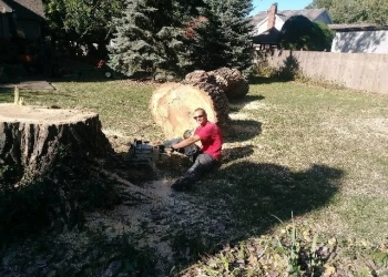 Kansas City tree service Monkee Tree Care Service