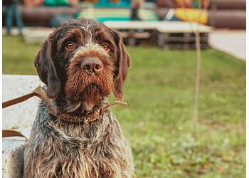 Washington dog training Monument Dog Training