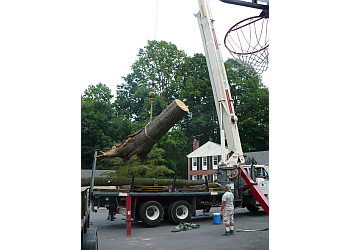 Alexandria tree service Moore & Wright Tree Service Inc.