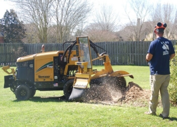 Baton Rouge tree service Mr. D's Tree & Stump Removal