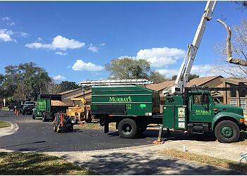 St Petersburg tree service Murray's Tree Service