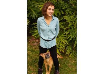 Detroit dog training My Sidekick Dog Training