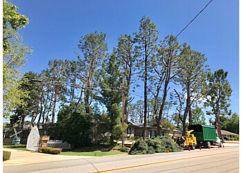 Corona tree service New Image Tree Care