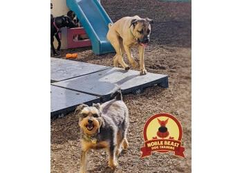 Denver dog training Noble Beast Dog Training