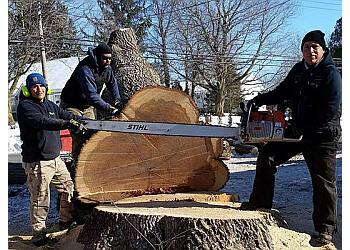Bridgeport tree service  Northeast Tree Service LLC