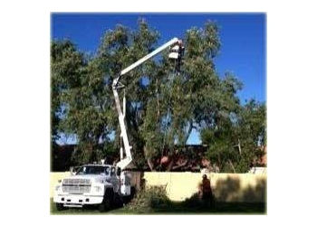 Gilbert tree service Oasis Tree Service