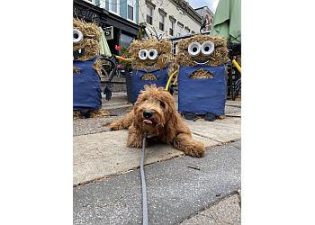Detroit dog training Off Leash K9 Training, LLC