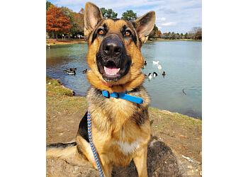 Houston dog training Off Leash K9 Training LLC