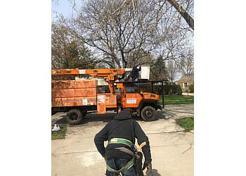 Detroit tree service Omar's Tree Service