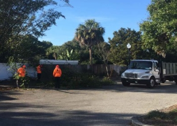 St Petersburg tree service On Demand Tree Service