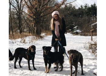 Rochester dog walker On the Move Pet Care