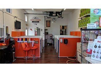 Miami pet grooming Orange Grooming