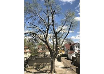 Kansas City tree service Outlaw Tree Service, LLC