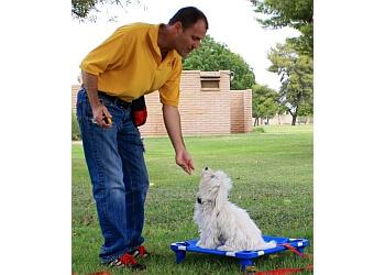 training & agility pets