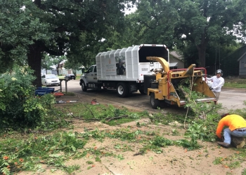 Arlington tree service PRICE RIGHT TREE SERVICE